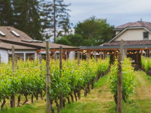 Deep Cove Winery location for EKSM Classical Summer Chamber Music Festival